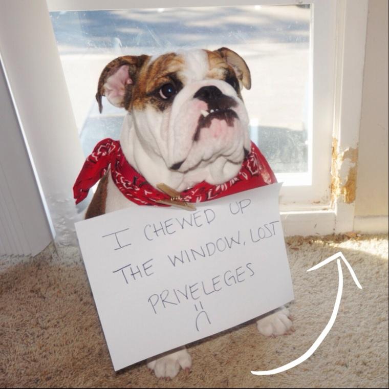 Winnie-Chews